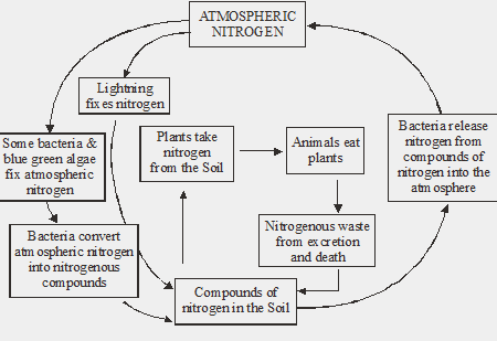 atmospheric nitrogen